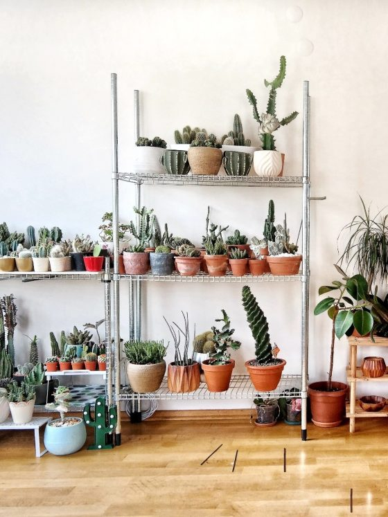A room full of indoor plants of all shapes and sizes.