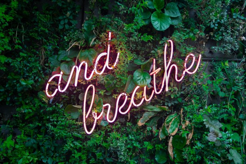 "Neon sign among leaves, reading ""and breathe""."